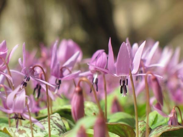 春の花スタンプラリー