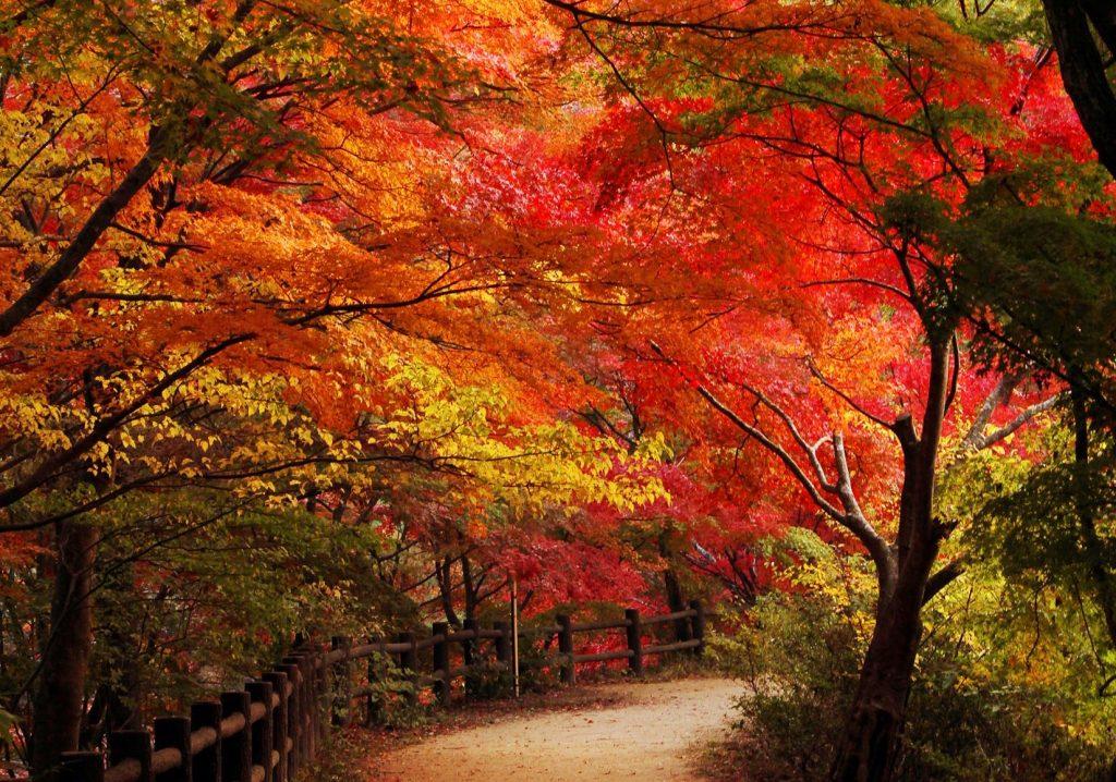 神戸のおすすめ紅葉スポット