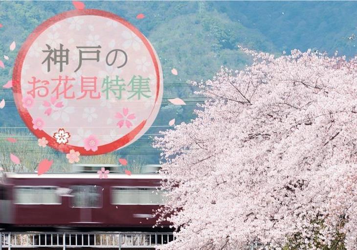 神戸でお花見!オススメの桜名所