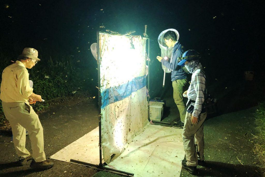 六甲高山植物園「夜の虫観察会」