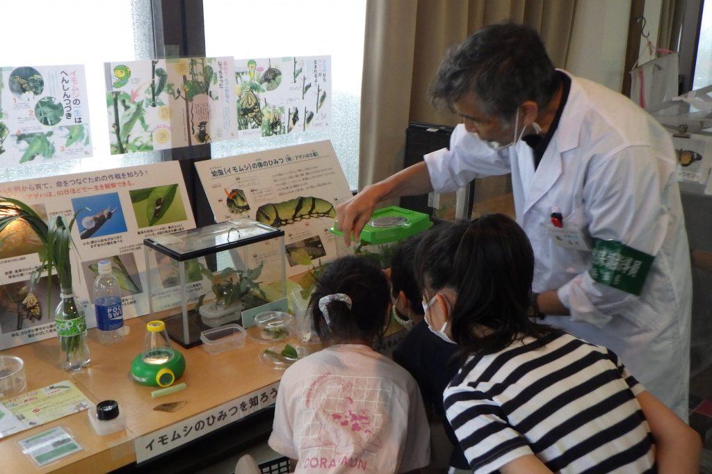 企画展「2021六甲山のチョウやイモムシとなかよくなろう」