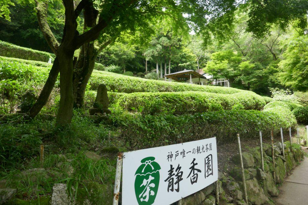 「静香園」こだわりのお茶を育てる神戸唯一の茶園