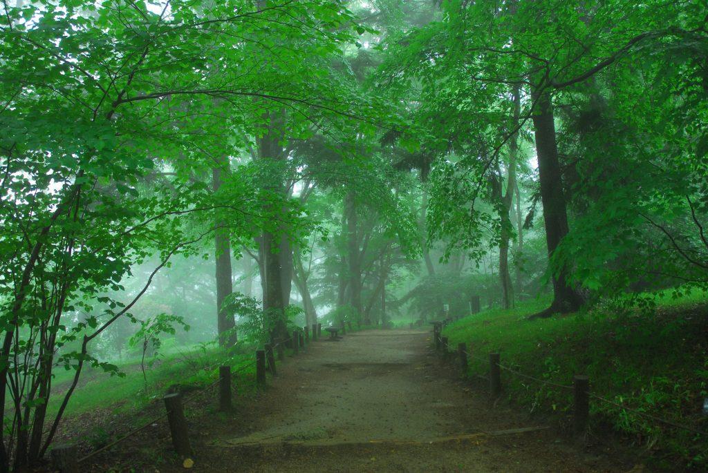 六甲高山植物園 早朝開園