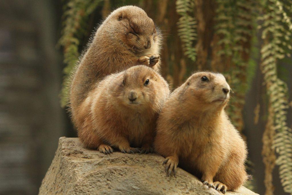 動物たちに癒される!神戸にある動物園・水族園の今をウォッチ