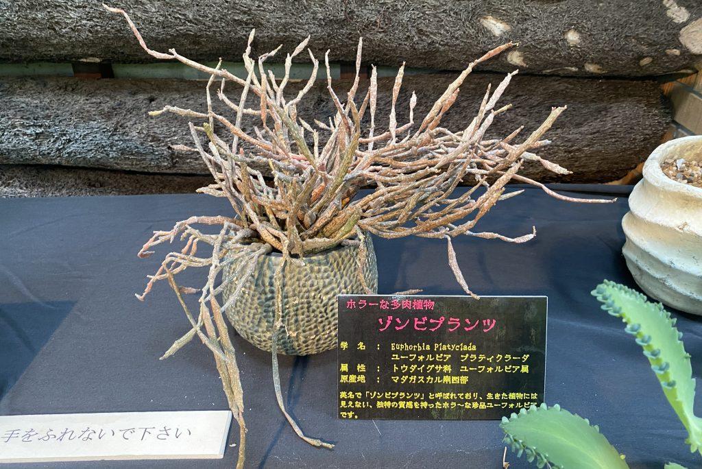 須磨離宮公園「ホラーな植物展」
