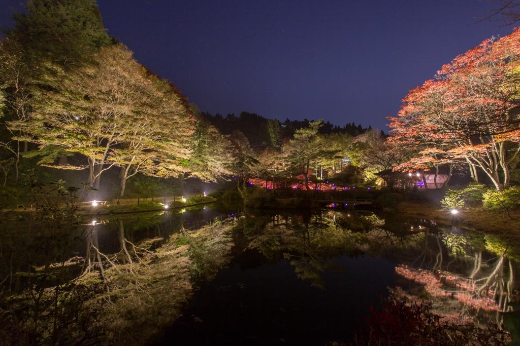六甲高山植物園「夜の紅葉散策 & ザ・ナイトミュージアム」