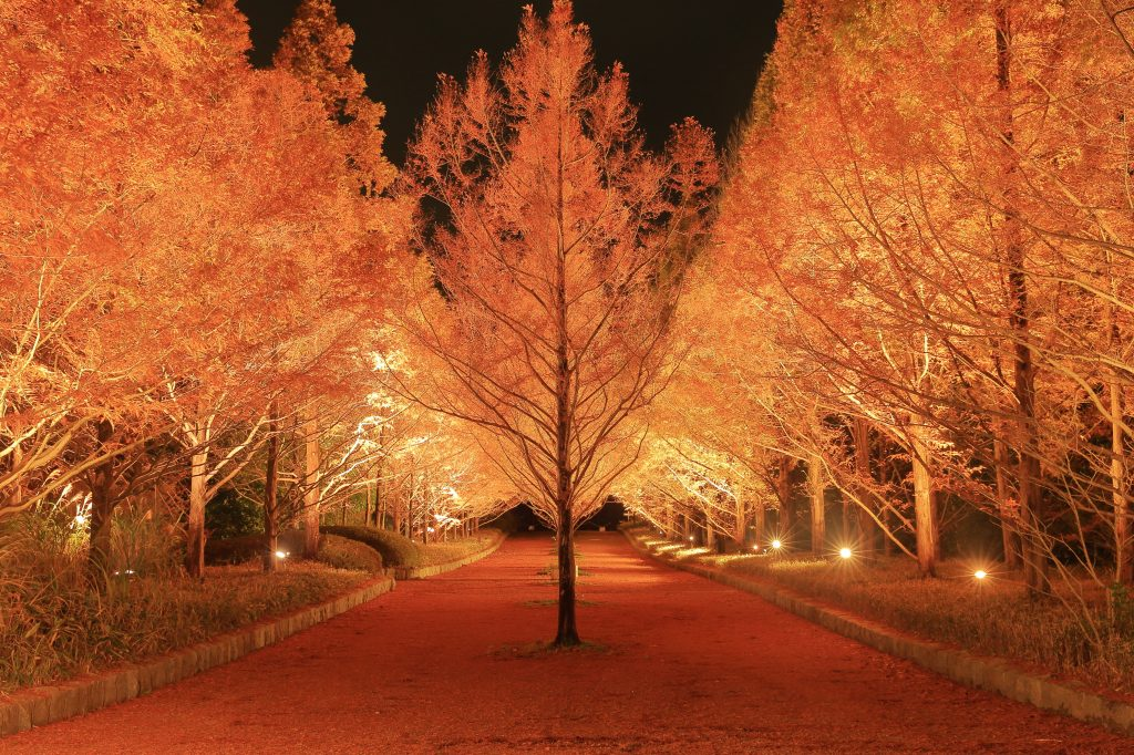 神戸市立森林植物園「森林もみじ散策」