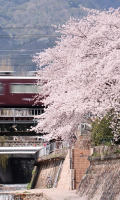 Feel KOBE + | Official Travel Guide of Kobe City