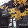 Tản bộ Kobe: Khám phá quận Nishi và đảo Port Island: day1